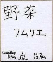 Seagul_sako